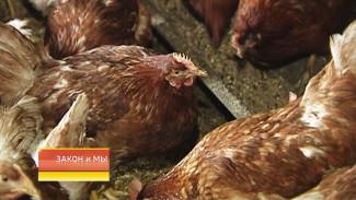 Воронежцы смогут узнать всё о покупаемом мясе, молоке и яйцах благодаря QR-коду