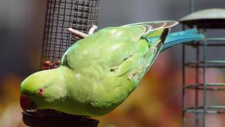 Воронежскому зоопарку подарили новых попугаев и кур после массовой гибели птиц