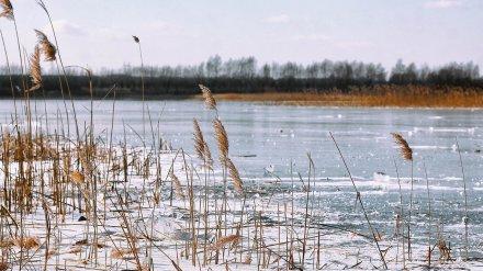СК проверит семью 8-летней девочки, утонувшей в реке под Воронежем