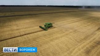 Воронежские аграрии не ждут новых зерновых рекордов в этом году