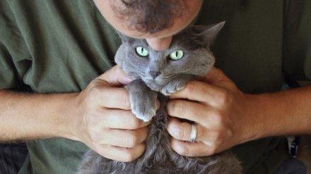 В Воронеже владелец умирающей кошки пришёл в ветклинику с пистолетом