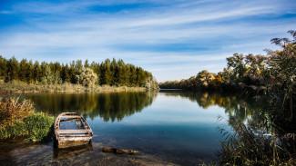 В водоёмы Воронежской области будут выпускать больше рыбы