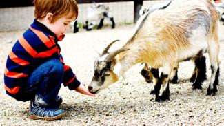 Воронежские многодетные семьи смогут посетить зоопарк бесплатно