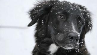 Владелец воронежского приюта для животных рассказал о расстреле собак догхантерами