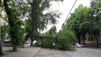 В центре Воронежа рухнувшее дерево повисло на проводах