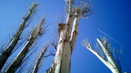Следователи проверят падение двух рабочих при обрезке деревьев в Воронеже