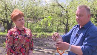 Воронежский агроном провёл мастер-класс по высадке рассады томатов в грунт