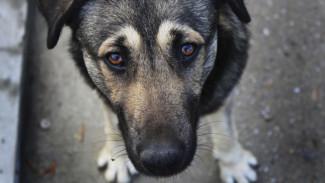 В Воронеже за год усыпили почти 1,8 тыс. бездомных собак