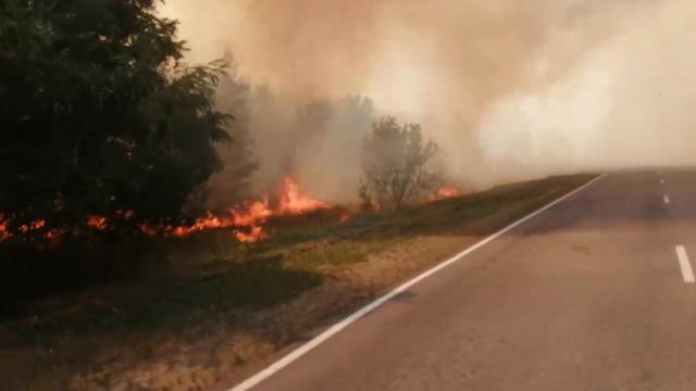 Трассу в Воронежской области заволокло дымом из-за лесного пожара: появилось видео