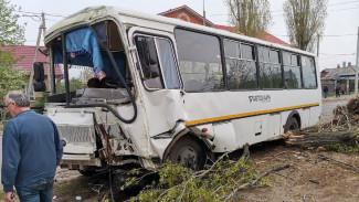 В Воронеже после ДТП маршрутка влетела в дерево: пострадали 3 пассажира