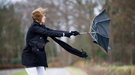 МЧС предупредило жителей Воронежской области об опасном ветре