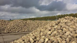 В Воронежской области закроют один из старейших сахарных заводов в России