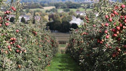 «Выбор» поучаствует в застройке яблоневых садов в Воронеже