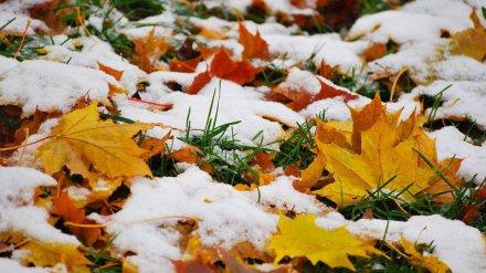 В Воронежской области в выходные выпадет первый ноябрьский снег