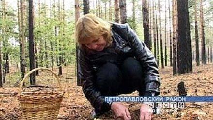 В Воронежской области начался грибной сезон