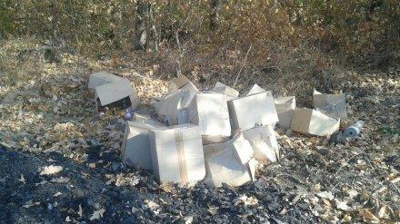 В Воронеже нашли коробки с просроченной вакциной для животных