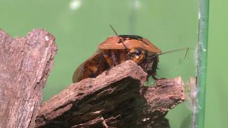Экзотические тараканы и скорпионы. Первый в Воронеже инсектариум открылся в жилом доме