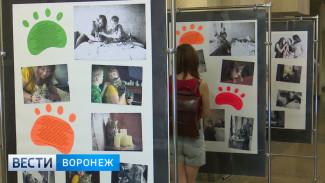 Воронежский фотограф проследил за судьбой покинувших приют животных