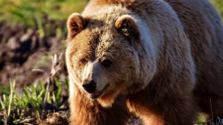 Хозяин зоопарка под Воронежем попал под следствие после нападения медведя на пенсионера