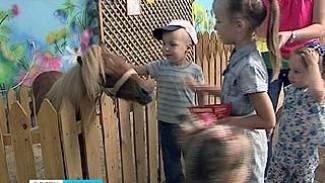 Мини-лошадь шетлендская появилась Воронежском зоопарке
