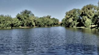 В Белгородской области из пруда достали тело воронежца