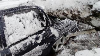 В Воронеже дерево рухнуло на парковку магазина
