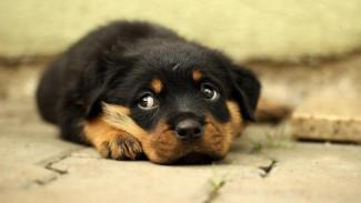 Выбросивший щенка с 5 этажа воронежец попал под уголовное дело