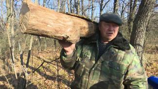 Экономят на дровах и очищают лес. Кто и как собирает валежник в Воронежской области
