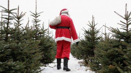 В Воронеже полицейские устроили облаву на похитителя новогодней ёлки