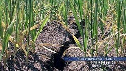 В Воронежской области из-за засухи объявлена чрезвычайная ситуация