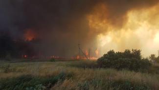 В уничтоживших 130 га леса двух пожарах обвинили воронежцев
