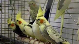 В Воронежском зоопарке назвали дату открытия обновлённого зала птиц