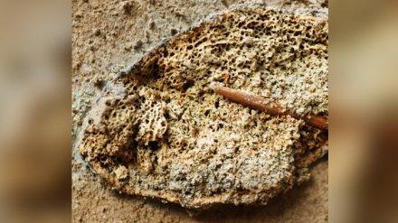Под Воронежем нашли древнейшее ребро мамонта с застрявшим в нём костяным наконечником