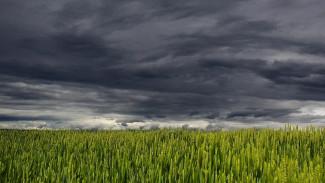МЧС предупредило воронежцев о грозах и шквалистом ветре
