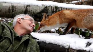 Ласки, лисы и куницы. Зачем дикие животные перебрались из леса в Воронеж
