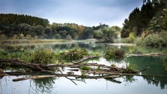 В Воронежской области проведут экологическую реабилитацию двух рек