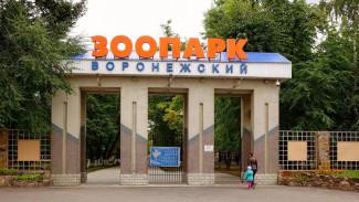 Воронежский зоопарк пригласил волонтёров помочь с благоустройством территории