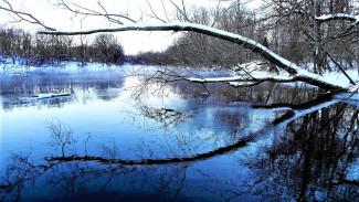 Под Воронежем 8-летняя девочка утонула в реке