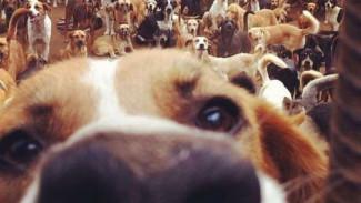 Будущее соседство с крематорием и бродячими собаками воронежцев не радует