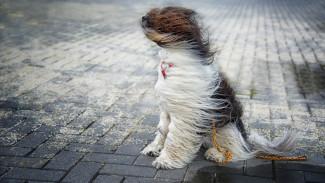 МЧС предупредило воронежцев о сильном ветре