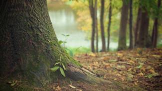 Облдума утвердила создание «зелёного пояса» вокруг Воронежа