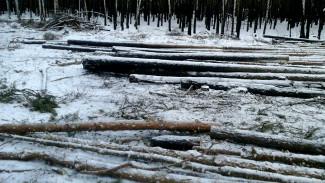 Воронежцы потребовали остановить вырубку леса в Отрожке под будущую застройку
