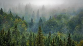 В воронежские леса планируют вложить почти 9 млрд рублей