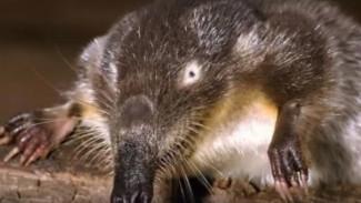 В Воронежском заповеднике назвали пять самых редких животных региона