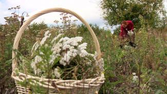 Многодетная мать из воронежского села создала парфюм из полевых цветов