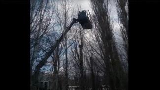 Воронежцы на автовышке спасли с дерева умирающего котёнка