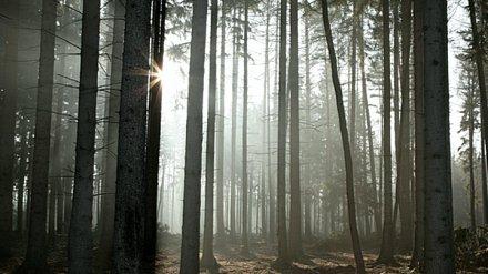 В Воронежской области двоих мужчин нашли повешенными