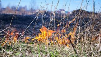 В Воронежской области почти 100 населённых пунктов окажутся под угрозой пожаров