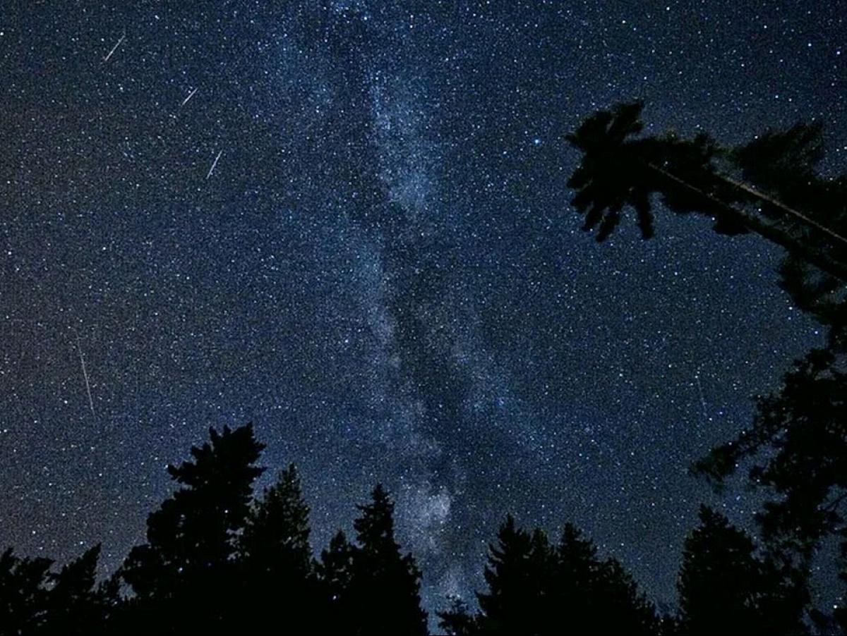 В августе воронежцы увидят мощнейший звездопад года – Новости ...