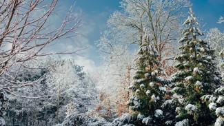 Новаянеделявстретит воронежцев снегом и морозом